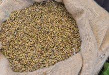 Crescimento do consumo mundial de café de 2% ao ano projeta 208 milhões de sacas até 2030